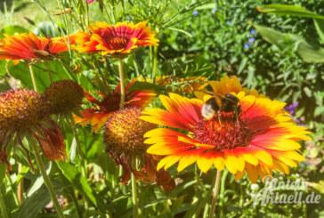 Gönn dir Garten: Tiere und Pflanzen vor der eigenen Haustür