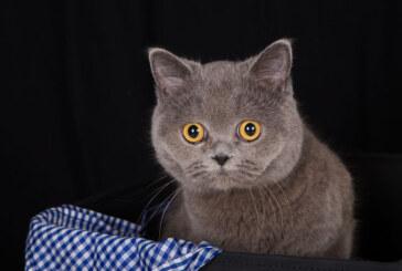 """""""Haustier des Jahres 2017"""": Tierischer Fotowettbewerb bei Photo Struck"""