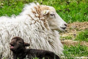 Tierischer Nachwuchs bei vierbeinigen Landschaftspflegern
