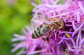 Grüne fordern Aktionsplan für bienenfreundliches Rinteln