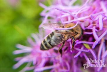 Exten: Bienen und Königin gestohlen