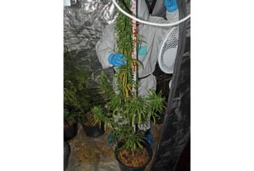 Stadthagen: Marihuana-Plantage mit über 100 Pflanzen bei 24-Jährigem beschlagnahmt