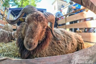Produkte aus der Region und Handwerk beim Rintelner Bauernmarkt am 3. Juni
