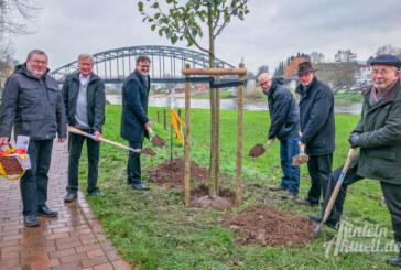 Stiftung für Rinteln: Apfelbaum am Alten Hafen gepflanzt