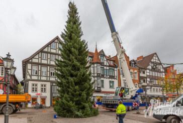 Weihnachten kann kommen, der Baum ist da