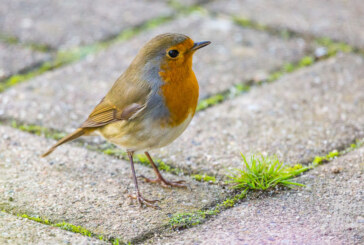 Drei goldene Regeln zum richtigen Füttern von Vögeln im Winter