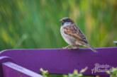 Rekordbeteiligung bei der Stunde der Gartenvögel