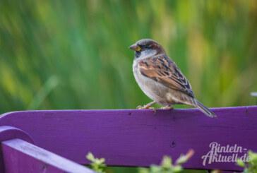 10. Stunde der Wintervögel: NABU und NAJU rufen zur großer Mitmachaktion vom 10. bis 12. Januar auf