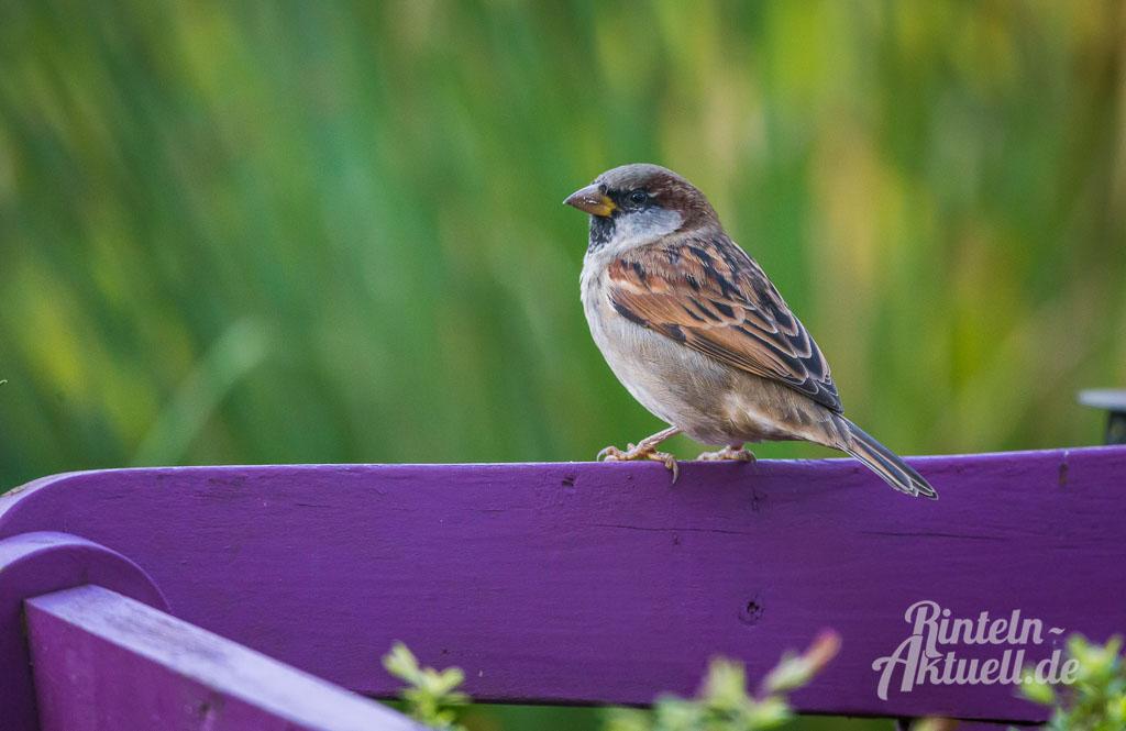 Tränken aufstellen: Vögel leiden unter dem Wassermangel