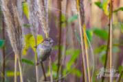 Am Muttertagswochenende Vögel beobachten: Stunde der Gartenvögel vom 8. bis 10. Mai