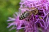 Schutz der Artenvielfalt durch Blühstreifen verbessern