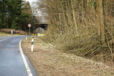 NABU-Amphibienzaun in Steinbergen beschädigt
