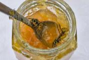 Tipps für den Umgang mit Wespen: Nicht anpusten oder wegschubsen
