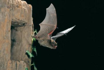 Mit Fledermaus-Detektoren im Blumenwall unterwegs