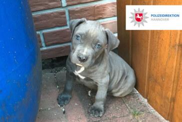 Auetal und Hannover: Polizei rettet 18 Hundewelpen bei Wohnungsdurchsuchungen