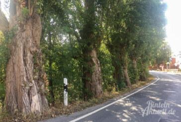 Rückschnitt statt Kahlschlag: CDU-Fraktion fordert Baumgutachten für Pappeln