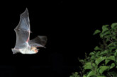 Für Kinder ab 6: Fledermaus-Entdeckertour am natour.NAH.zentrum Schillat-Höhle