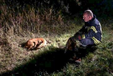 Friedrichshöhe: Feuerwehr rettet hilfloses Reh aus Teich