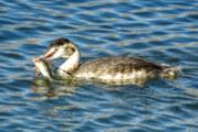 Zugvogel-Exkursion: Blick bei bestem Herbstwetter auf die Hohenroder Kiesteiche