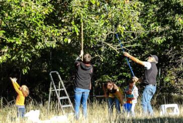 Junge Naturschützer ernten säckeweise Äpfel