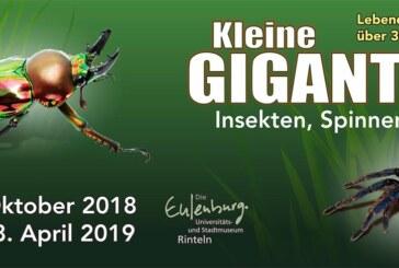 Kleine Giganten: Neue Ausstellung mit Insekten, Spinnen & Co. im Museum Rinteln