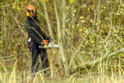 Hohenrode: Motorsägen schaffen mehr Durchblick