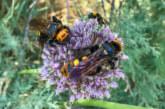 Dem Insektenschwund auf der Spur