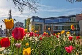 """""""Lust auf Frühling"""": Frühlingsüberraschungen am 16. März in Rintelns Einzelhandel"""