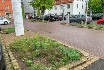 70 Jahre Grundgesetz: Gedenkbäume und Infotafeln sollen aufgestellt werden