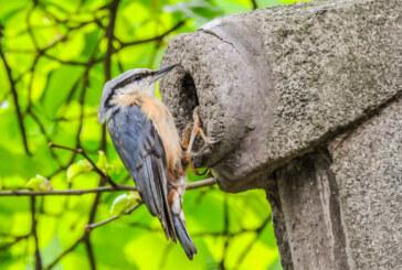 Von Amsel bis Zilpzalp: Faszinierende Einblicke in Rintelner Vogelwelt