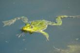 Über 2100 Amphibien sicher zum Laichgewässer gebracht