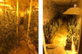 450 Cannabispflanzen sichergestellt: Polizei beschlagnahmt Indoorplantage im Auetal