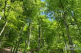 Verein Waldkurort Goldbeck lädt zum Waldbaden ein