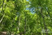 Unser Wald: Exkursion in Hohenrode