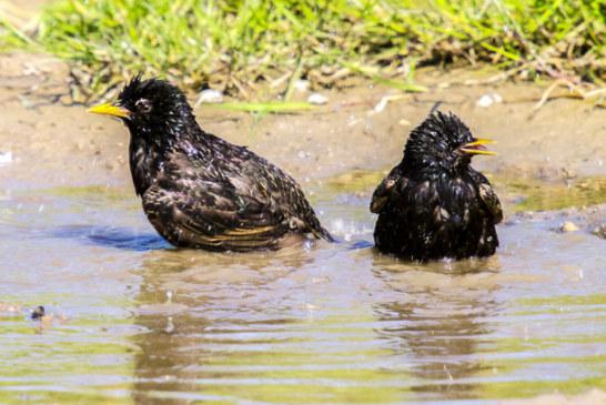 Wie gehen Insekten und Vögel mit der Sommerhitze um?