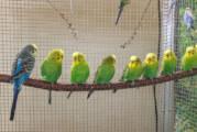 Vogelschau in der Mehrzweckhalle Engern