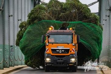 Weihnachtsbaum-Lieferung in XXL: Tanne am Rintelner Marktplatz aufgestellt