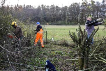 Wertvolle Lebensräume gepflegt: NABU schneidet Hecke an der Streuobstwiese