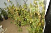 Auetal: Polizei beschlagnahmt Marihuana-Plantage