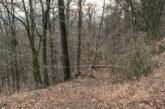 Todenmann: Wald wegen Fällarbeiten Ende Januar gesperrt