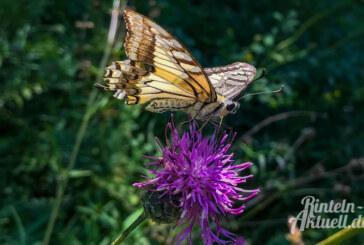 Mehr Pflanzen und neuer Mitarbeiter für Artenvielfalt in Rinteln