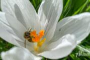 """Rat stimmt nach reichlicher Diskussion für Erweiterung des Aktionsplans """"Bienenfreundliches Rinteln"""""""