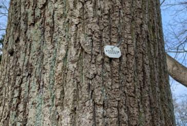 """Warum tragen die Bäume im Blumenwall """"Nummernschilder""""?"""