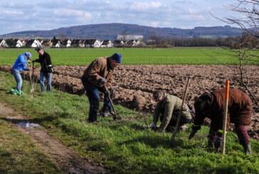 Artenreiche Heckenwege für Rinteln