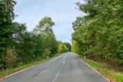 Baumfällung im Möllenbecker Wald: Kreisstraße 80 am Mittwoch gesperrt