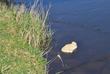 Schleimige Schaumklumpen in der Weser sorgen für Polizeieinsatz