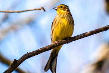 """Geplante Wanderung im Blumenwall entfällt: Spaziergang mit Vogelstimmen zur """"Stunde der Gartenvögel"""" individuell möglich"""