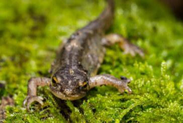 Amphibienwanderung für dieses Jahr beendet: Weniger Tiere als im Vorjahr