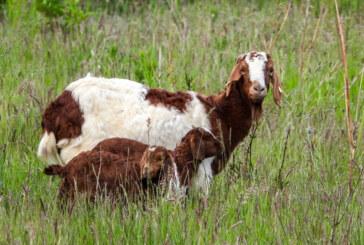Auenlandschaft im Frühsommer entdecken: NABU Rinteln gibt Ausflugstipps zur Erkundung des Naturschutzgebietes