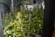 Veltheim: Polizei entdeckt 170 Cannabispflanzen in Wohnung